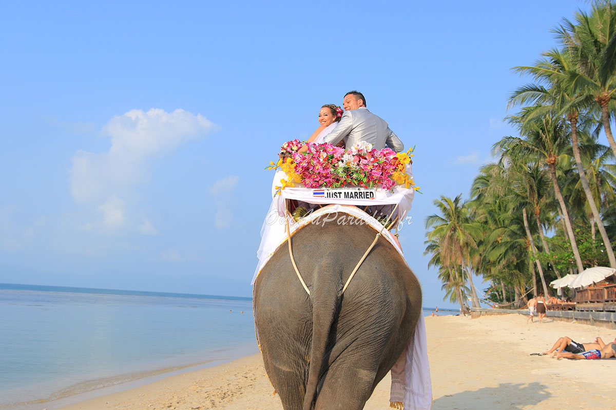 Organisation-Mariage-marier-maries-mariee-ceremonie-Thailande-Plage-ile-Koh-Samui-Island-thai-evenementiel-evenements-demande-fiancailles-EVJF-EVG-noces-voyages-Wedding-ceremony-Planner-Thailand-Beach-Events-event-request-bachelor-bachelorette-groom-bride-bridal-Elephant-entree-shooting-photos-arrivee-32