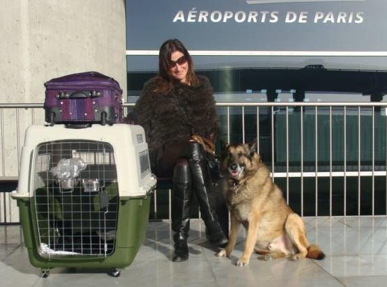 Transport-importation-expatriation-animal-de-compagnie-chien-chat-Thaïlande
